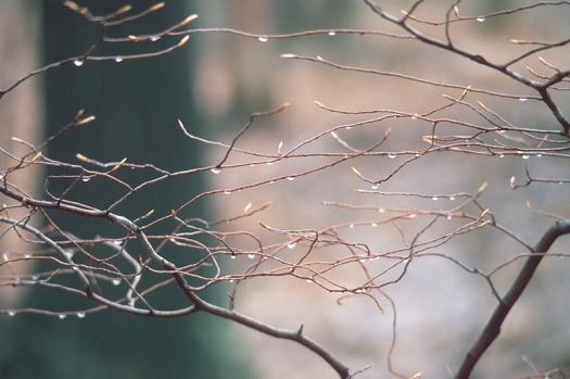 raindrops_tree.jpg