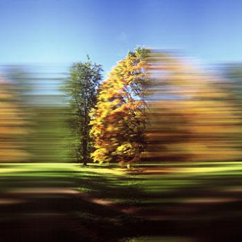 99_westonbirt_arboretum_iii_350px1