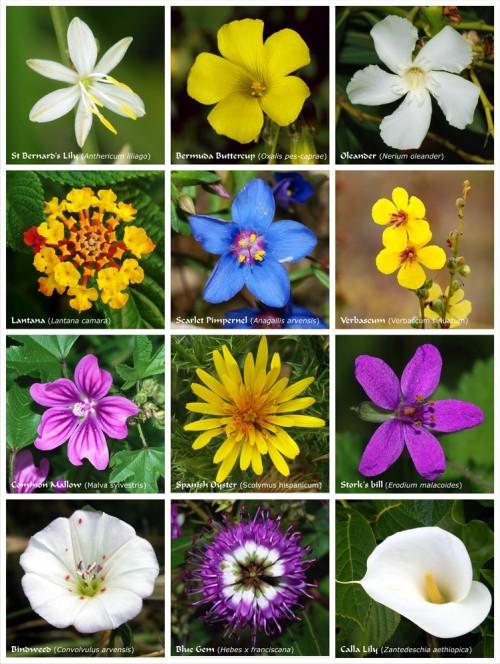 Flower_poster_2