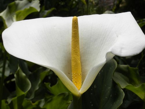 800px-white_and_yellow_flower_