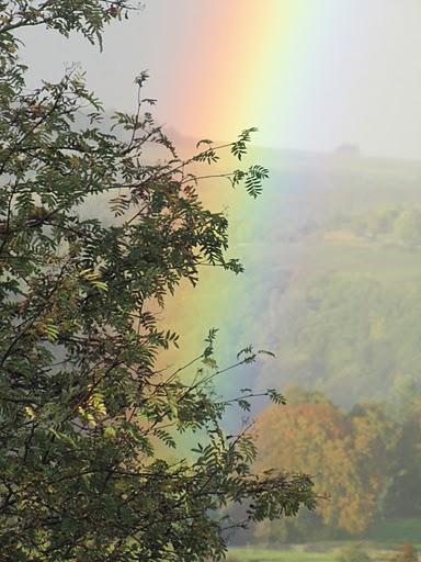 Tree_rainbow